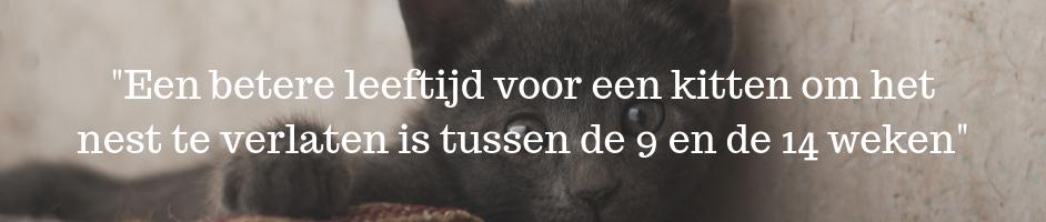 _Het beste is een kitten verhuizen tussen de 9 en 14 weken_ (1)